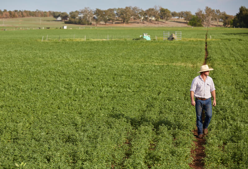 "<img alt='""Limestone Park"", Loomberah: Bryce McMurtie checks on his irrigated Lucerne crop.'>"